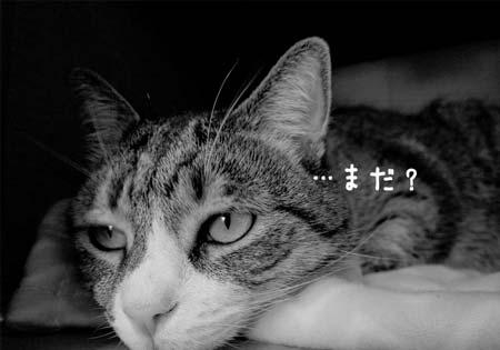 退屈な猫「まだ?」